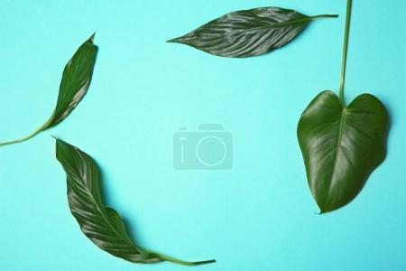 Tropical leaves on color background, flat lay