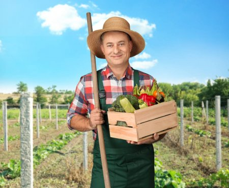 Agronomist holding crate with various vegetables in field