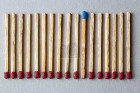 Foto de El azul coincide entre los marrones sobre fondo claro. Concepto de diferencia y singularidad - Imagen libre de derechos