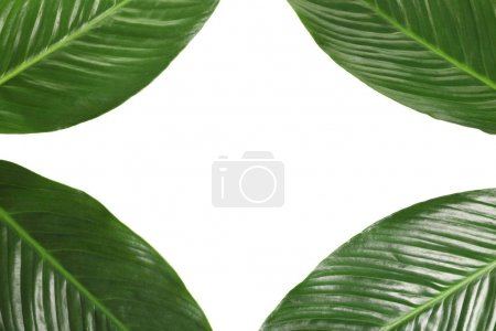 Beautiful frame made of tropical banana palm leaves on white background