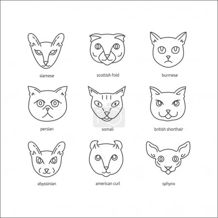 Cat breeds line icon set.