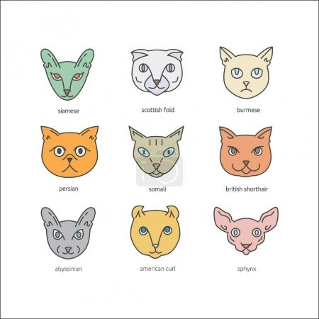 Cat breeds icon set