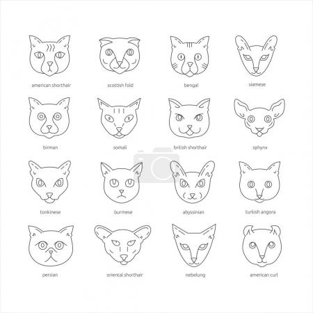 Cat breeds outline icon set