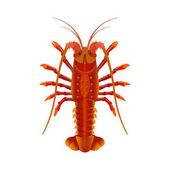 Rock spiny lobster