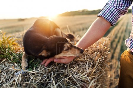 Photo for Little dog put muzzle on male hand lying outdoors in grass at sunset - Royalty Free Image