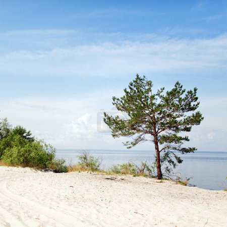 Landscape with pine on beach