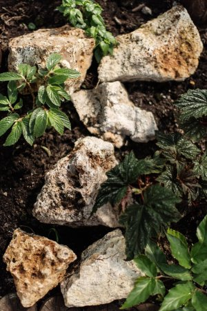 Green foliar plants and natural stones
