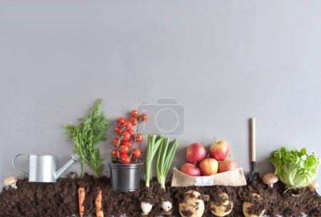 Photo pour Fruits et légumes cultivés dans le compost, y compris les carottes, les champignons, les pommes de terre et la laitue - image libre de droit