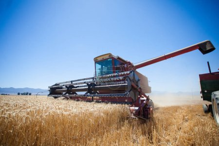 Wide angle view of a combine harvester