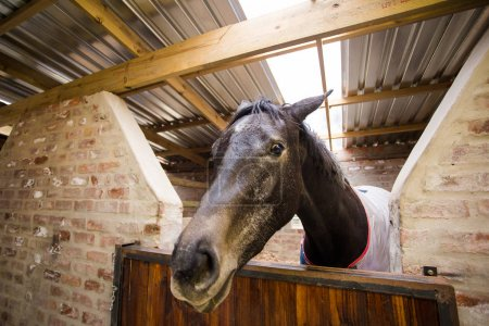 Horse in stable on a farm