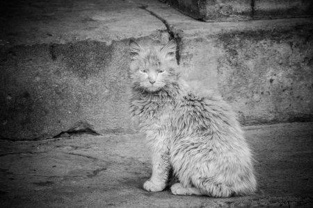 Photo pour Sale vieux chat assis sur le porche d'une vieille maison . - image libre de droit