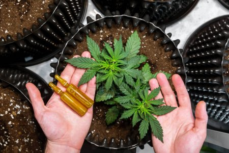 Photo for Medicinal Cannabis. Hands holding ampoules and Marijuana Leaves on Top of Plants - Royalty Free Image