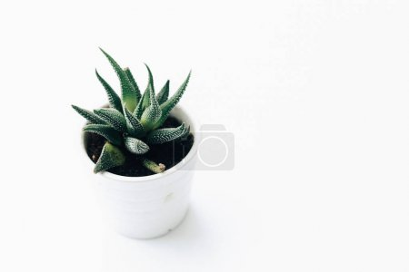 House plants potted, succulents on clean white background