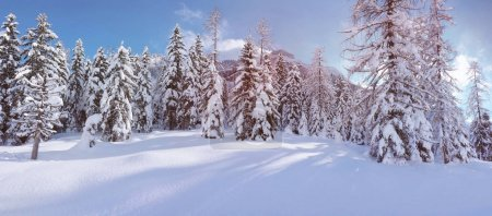 Landscape with coniferous trees covered with snow