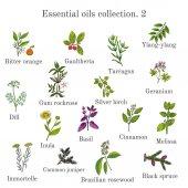Set of essential oil plants Hand drawn ector illustration