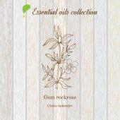 Gum rockrose essential oil label aromatic plant
