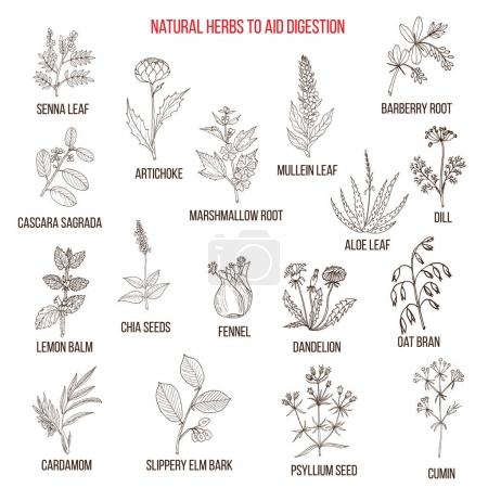 Herbal remedies for aid digestion