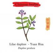 Medicinal herbs of China. Velvetleaf