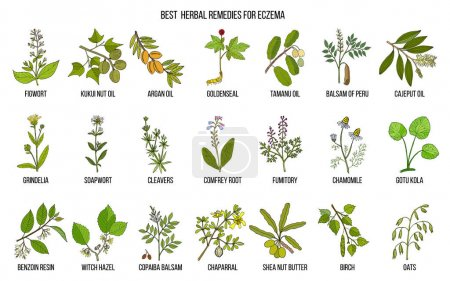 Best medicinal herbs for eczema. Hand drawn vector...