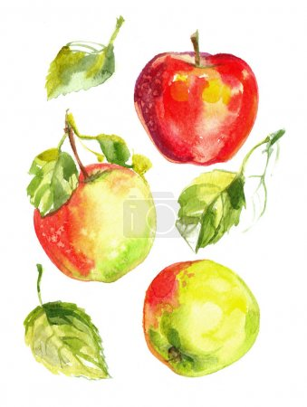 Apples painted with watercolors on