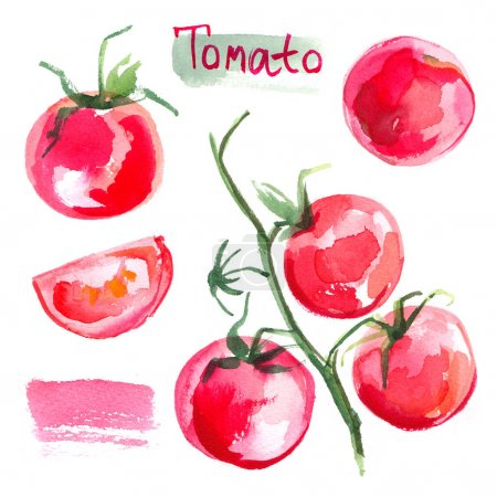 Set tomatoes drawn background. Study vegetables.  food