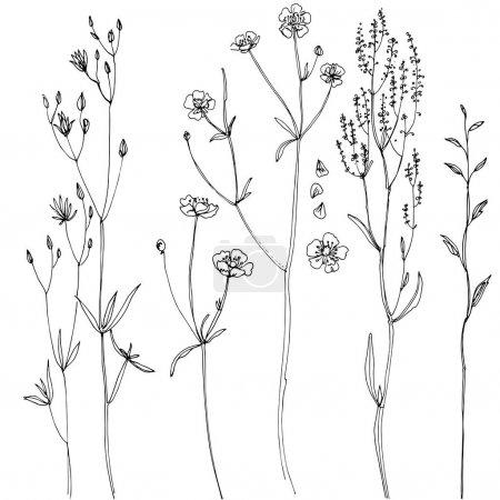 hand-drawn herbs set
