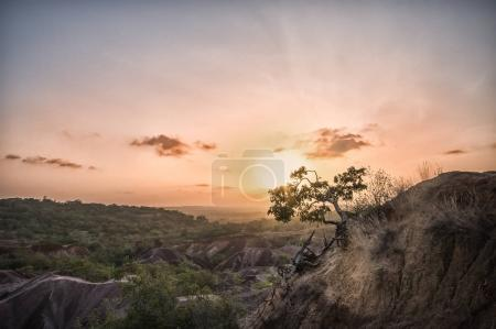 African tree at sunset in Marafa - Africa