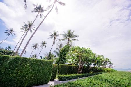 Palms against beautiful blue sky