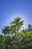 Amazing scenic view Tropical forest on background green trees in the morning rays of the sun