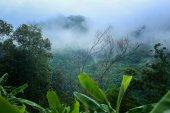Morning fog in a wild tropical rainforest