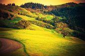 Northern California Countryside