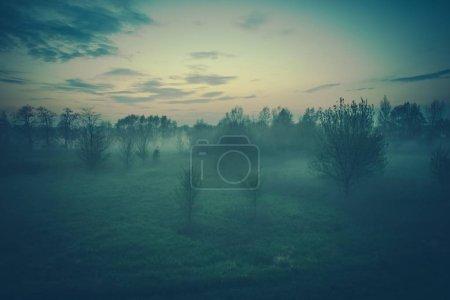 Photo pour Foggy Soirée Nature Paysage. Petit brouillard printanier précoce . - image libre de droit