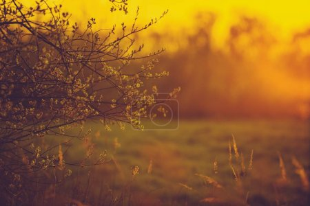 Photo for Warm Sunset Light Landscape. Spring Sunset on the Edge of the Forest - Royalty Free Image