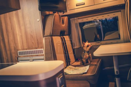 Photo for Pet in a Camper RV Motorhome. Australian Silku Terrier in the Camper Van Seating Next to Map. - Royalty Free Image