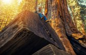 Sequoia Forest Hiker