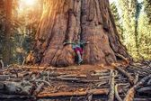 Hugging Giant Sequoia Redwood