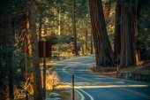 Sequoia Park Road Trip