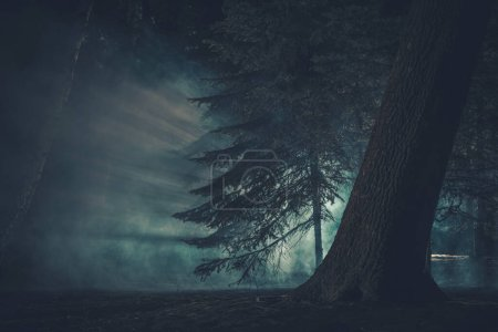 Dark Mysterious Forest Covered by Strange Fog. Creepy Halloween Woodland Concept.