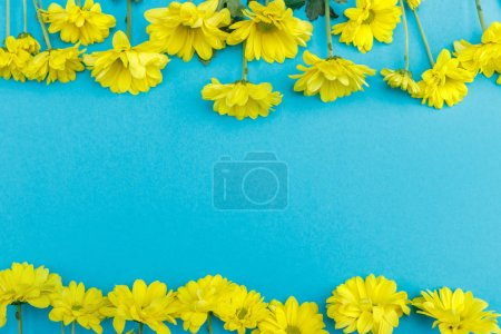 Photo for Top view of beautiful yellow blooming chrysanthemum flowers isolated on blue background - Royalty Free Image