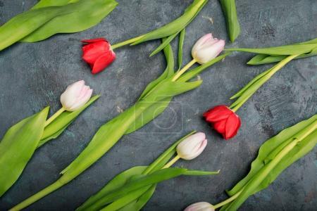 Beautiful tender tulips