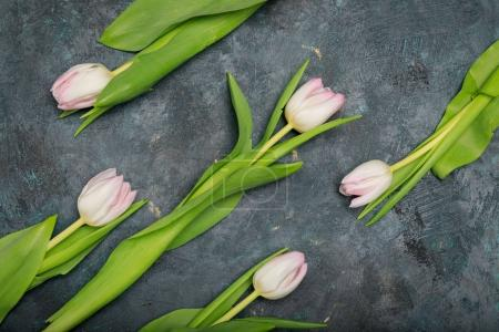 Photo pour Vue de dessus de belles tulipes roses tendres avec des feuilles vertes sur noir - image libre de droit