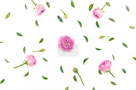 Photo for Top view of beautiful pink flowers with buds and green leaves isolated on white - Royalty Free Image