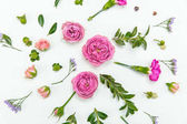 """Постер, картина, фотообои """"красивые розовые розы"""""""