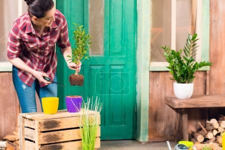 Photo pour Sourire jeune femme enlever la plante avec de la terre en pot - image libre de droit