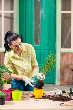 attractive brunette woman transplanting plant in new flowerpot on porch