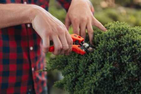 gardener cutting bush with pruning shears