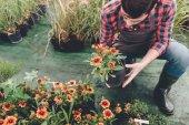 """Постер, картина, фотообои """"Садовник проверки цветок в саду"""""""