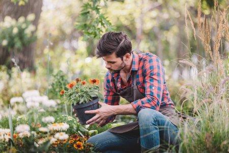 Gardener holding flower in flowerpot