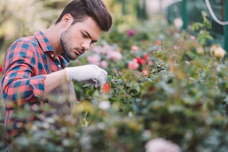 Gardener checking plants during work