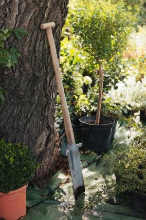 Dirty spade in garden